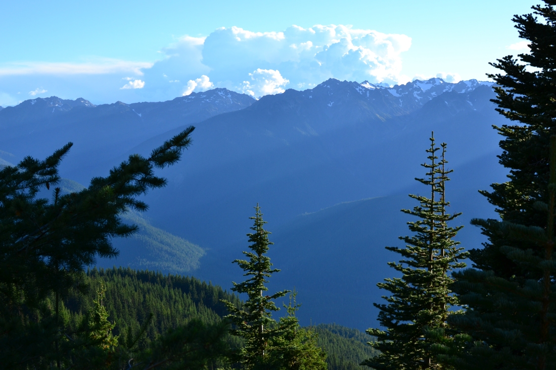 View from hurricane ridge, Olympic National Park, Washington