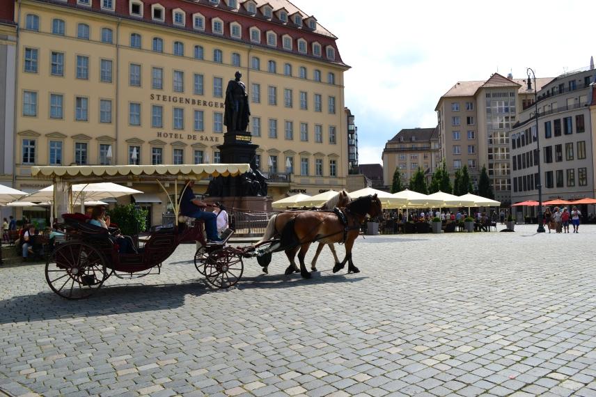 Neumarkt Quarter horse and carriage