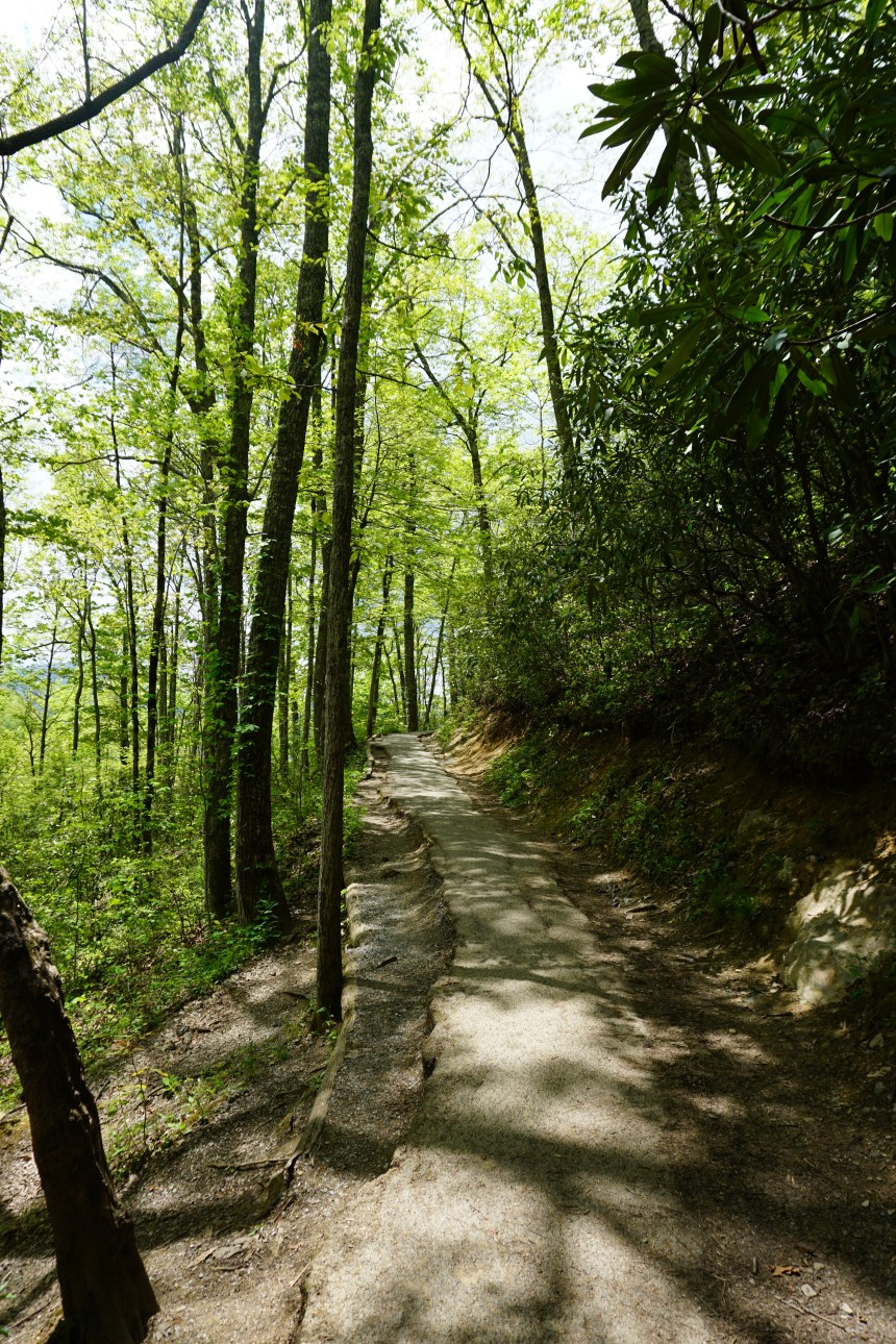Roughest section of Laurel Falls Hike in the Great Smoky Mountains National Park, Tennessee